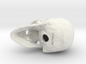 Human skull - 65mm in White Natural Versatile Plastic