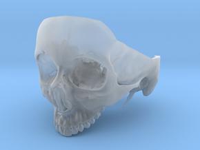 Subject 5a | Calvarium + Teeth in Smooth Fine Detail Plastic