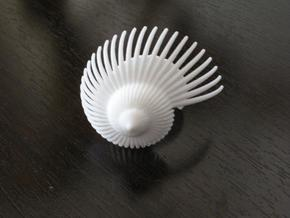 Fractal Conch -2 in White Natural Versatile Plastic