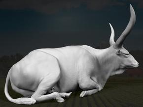 Ankole-Watusi 1:16 Lying Female 1 in White Strong & Flexible