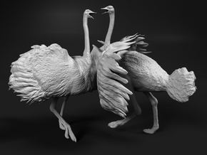 Ostrich 1:16 Fighting Pair in White Natural Versatile Plastic