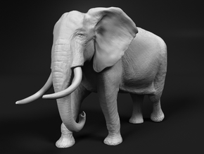African Bush Elephant 1:96 Walking Male in Smooth Fine Detail Plastic