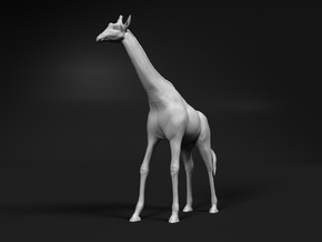 Giraffe 1:35 Standing Male in White Natural Versatile Plastic