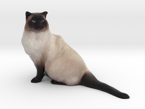 Birman Cat 001 in Full Color Sandstone
