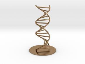 DNA Molecule Model Ladder. Sizes. in Natural Brass: 1:10