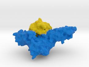 GM-CSF Receptor with Cytokine in Full Color Sandstone