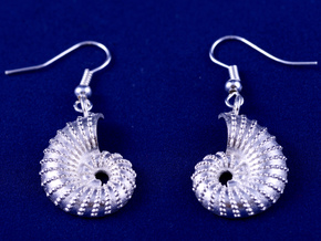 Nautilus Shell Earrings in Natural Silver