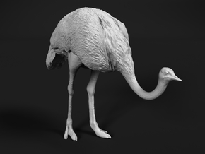 Ostrich 1:35 Head Down in White Natural Versatile Plastic