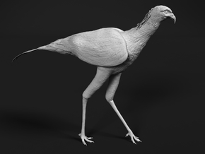 Secretarybird 1:6 Walking in White Natural Versatile Plastic
