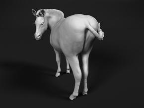 Plains Zebra 1:9 Looking Male in White Natural Versatile Plastic