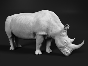 White Rhinoceros 1:45 Grazing Female in White Natural Versatile Plastic