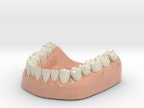 3D Teeth lower in Coated Full Color Sandstone