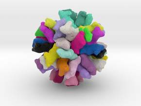 Feline Calicivirus in Full Color Sandstone
