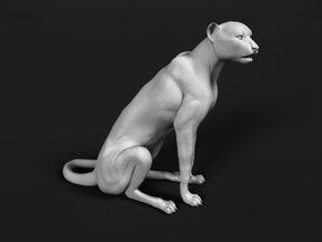 Cheetah 1:9 Sitting Male in White Natural Versatile Plastic