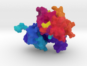 Insulin Receptor in Full Color Sandstone