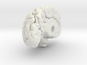 Left Brain Hemisphere 1/1 in White Natural Versatile Plastic