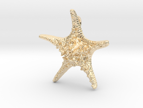 Knobby Starfish Pendant in 14k Gold Plated Brass