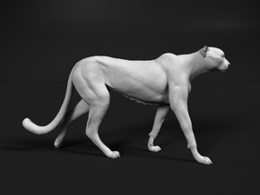 Cheetah 1:25 Walking Male 1 in White Natural Versatile Plastic