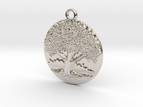The big old tree in Rhodium Plated Brass
