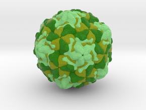 Swine Vesicular Disease Virus in Full Color Sandstone