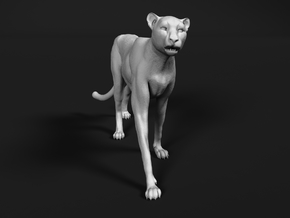 Cheetah 1:6 Walking Male 2 in White Natural Versatile Plastic
