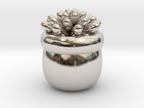 Succulent No.1 in Rhodium Plated Brass