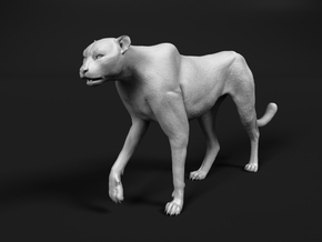 Cheetah 1:17 Walking Male 3 in White Natural Versatile Plastic