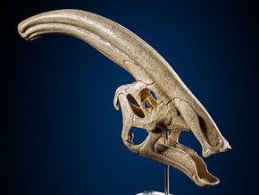 Parasaurolophus - dinosaur skull replica in White Strong & Flexible: 1:12