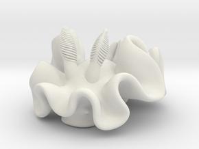 ardeadoris-cruenta in White Natural Versatile Plastic: Small