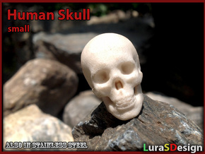 Skull - Human, small  in White Strong & Flexible