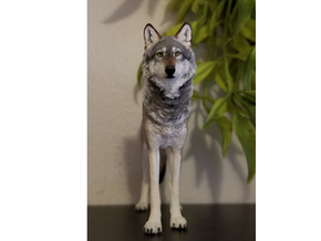 North American Gray Wolf in White Processed Versatile Plastic