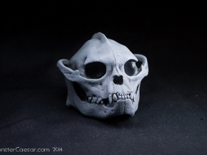 Skull 6 Hollow 2 in White Natural Versatile Plastic