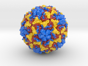 Rhinovirus in Glossy Full Color Sandstone