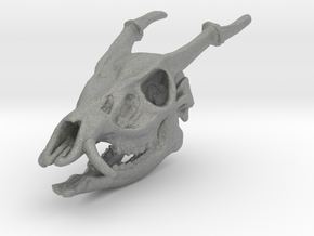 Muntjac Skull Solid Miniature in Gray Professional Plastic