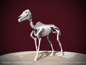 Horse Skeleton in White Natural Versatile Plastic