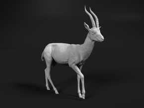 Thomson's Gazelle 1:6 Walking Male in White Natural Versatile Plastic