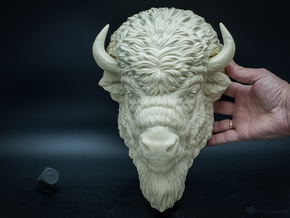American Bison head. Wall-mounted sculpture in White Natural Versatile Plastic: Large