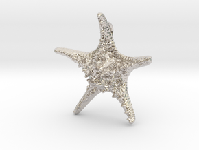 Knobby Starfish Pendant (Small, Solid) in Rhodium Plated Brass