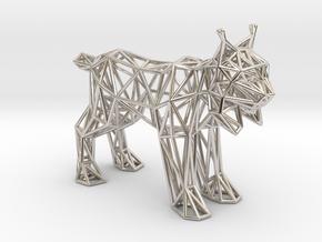 Spanish Lynx (adult) in Platinum