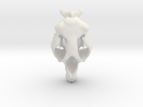 Hydrodamalis Skull- Stellers Seacow in White Natural Versatile Plastic