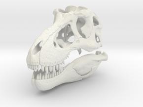 Tyrannosaurus - dinosaur skull replica in White Natural Versatile Plastic: 1:12