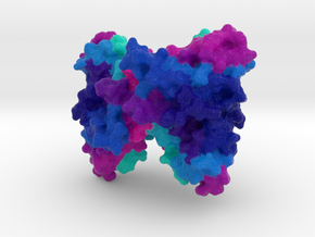 Cytotoxic T Lymphocyte-Associated Protein 4 CTLA4 in Natural Full Color Sandstone