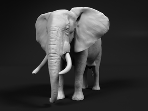 African Bush Elephant 1:64 Standing Male in Smooth Fine Detail Plastic