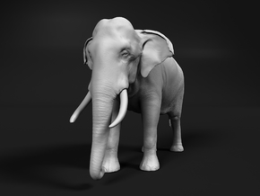 Indian Elephant 1:16 Standing Male in White Natural Versatile Plastic