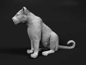 Lion 1:12 Sitting Cub in White Natural Versatile Plastic