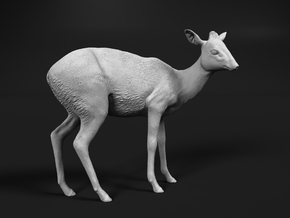 Kirk's Dik-Dik 1:1 Standing Female in White Natural Versatile Plastic