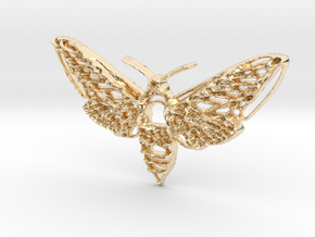 Hawkmoth in 14k Gold Plated Brass