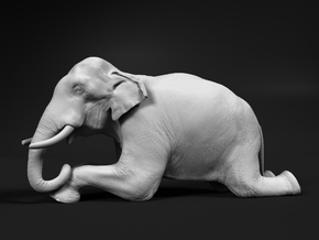 Indian Elephant 1:16 Kneeling Male in White Natural Versatile Plastic