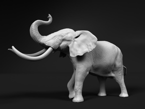 African Bush Elephant 1:22 Aggressive Male in White Natural Versatile Plastic