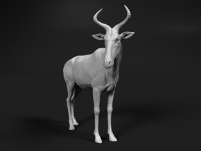 Swayne's Hartebeest 1:22 Standing Male in White Natural Versatile Plastic